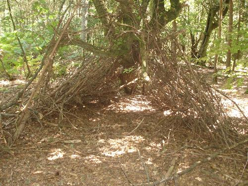 Hide Made From Sticks - St. Leonards Forest... a hide made from sticks.