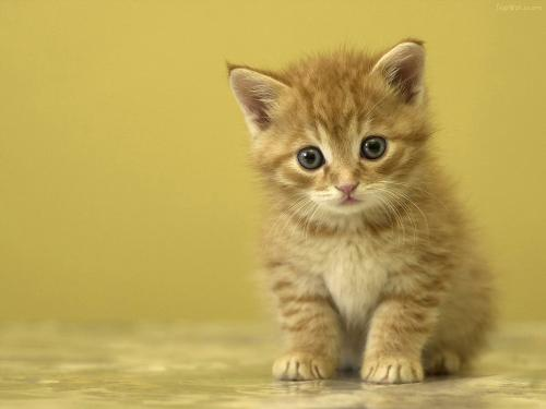 catttttty the cute.. - I love cats..they are so cute..