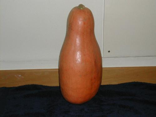 Pumpkin? - My mother gave me this today, she claims it is a pumpkin. I need to cook it before it goes off.