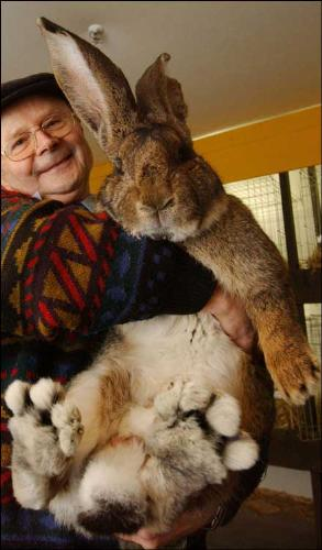 HUGE Bunny! - This is a pic of a very large bunny! He weighs 122 lbs!!