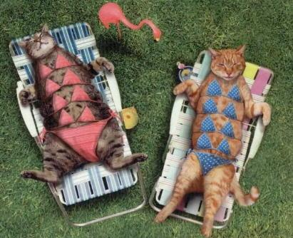 bikini cats - cats enjoying the sun haha
