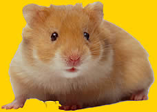 What Are You? - A pet guinea pig or hamster.