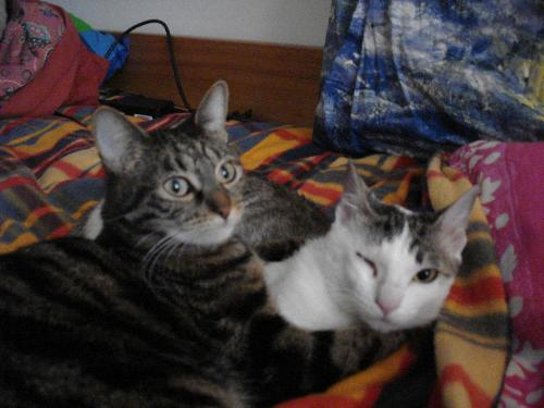 my cats - here are my 2 babies: Mirò (the white one) due to the tortures lost an eye, and nobody wanted her for that reason.