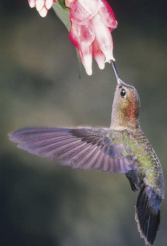 Hummingbirds - The looks so beautiful yet they are flapping their wings SO hard to stay in the air. That is SO me (except the beautiful part!!).