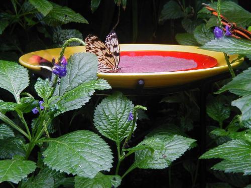Butterflies - Butterfly Conservatory Niagara Falls September 2006