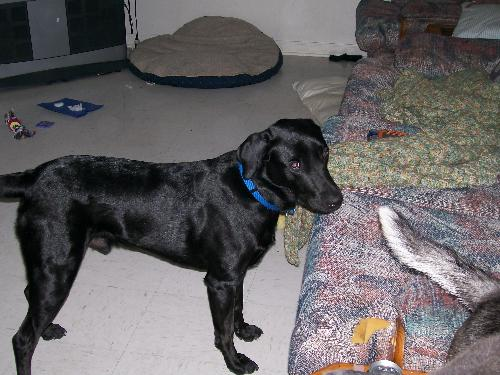 Jesse at 1 and a half years old - I think he was debating on wether I would let him get up on the couch or not!