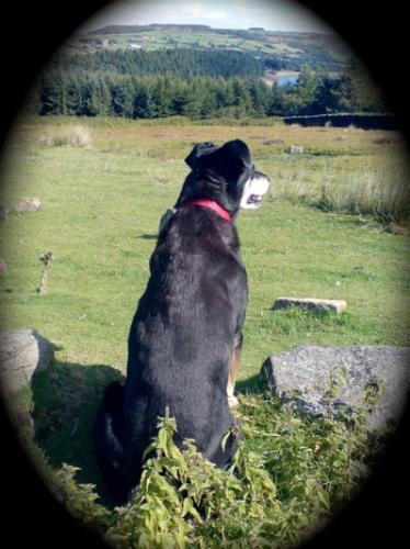 Jess - heres a picture of Jess in good health, she's lost some weight since being diagnosed with diabetes but she is still great company