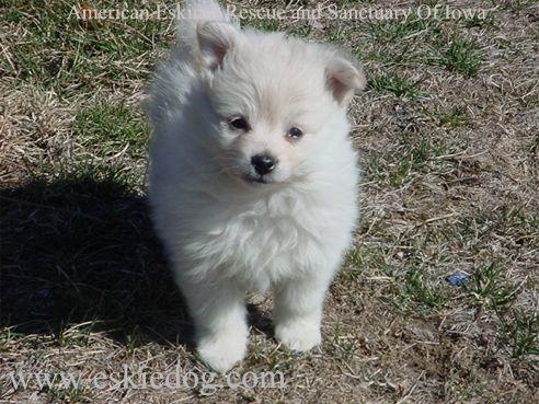 A Dog - A very cute puppy.