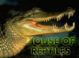 I don't like them at all! - Reptiles as pets