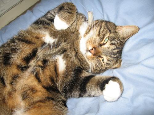 Moomin - My lovely furry foot warmer