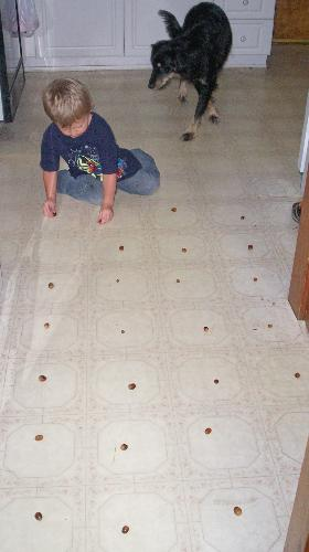 My Son - This is my son playing with acorns. He lined them all up in the squares of the tile.