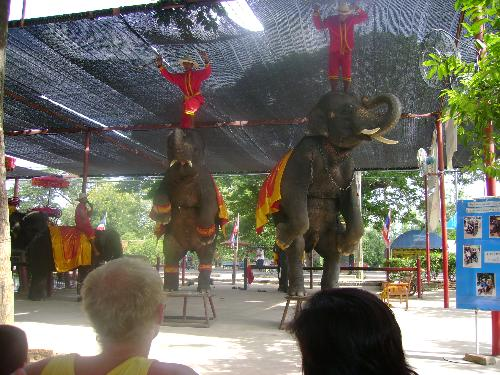 elephant show - elephant do some acrobatic