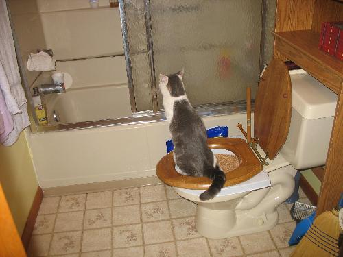 Rocky going on the potty - This is my cat Rocky when I was attempting to toilet train him.