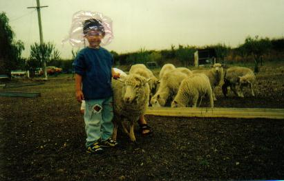 lamb - my nephew with some lamb and sheep