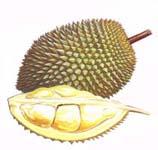 Durian - Stinky but taste so divine!