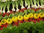 Fresh vegetables - fresh vegetables