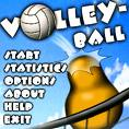 volleyball - volley ball