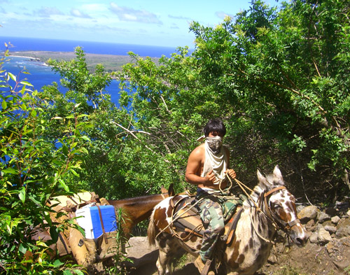 Muleskinner on trail /Molokai - A muleskinner navigates a trail on Molokai leading tourists.