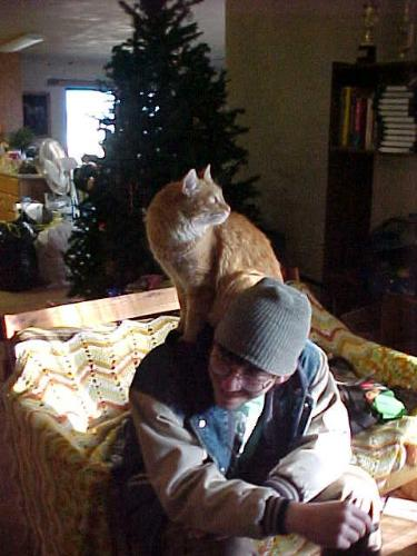 Russell - my cat - Russell's new Christmas trick. Such a proud puss, using my son's shoulders for a perch.