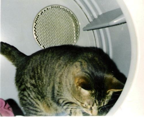 My cat in the Dryer - It's his favorite hangout lately which is weird.