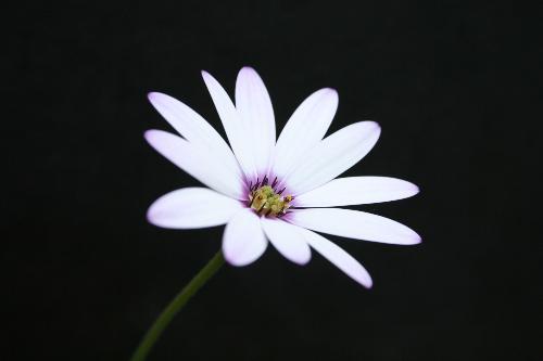 White Flower Macro Shot - Flower macro shot from camera