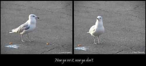 seagull - a seagull, he ate a curly fry.