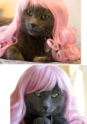wigs for cats - wigs for cats