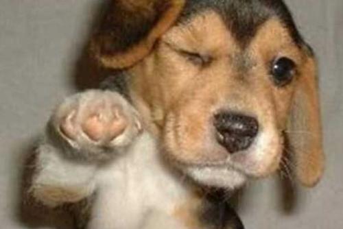 Awesome dog! - fun!