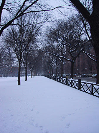 snow on tree-lined walk in winter - snow on tree-lined walk, taken after a heavy snowfall.