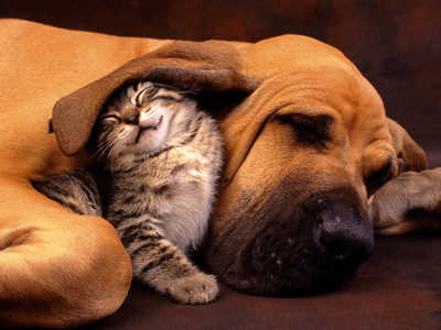 aww aint that the cutest thing -  which animal do you think it better. state reason and why
