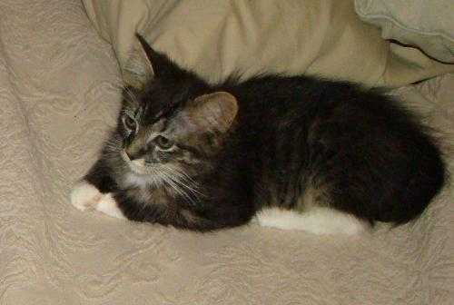 New pix of Sox/Mia - See how cute she's gotten, and how much bigger!