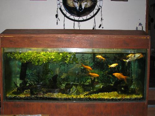 Pin koi fish aquarium in hd on vimeo on pinterest for Coy fish aquarium