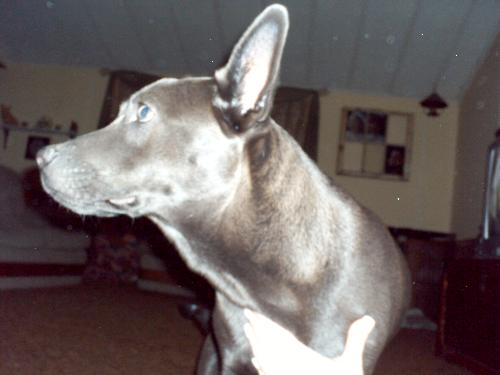 Haze - This is my boy. I just don't know his breed!