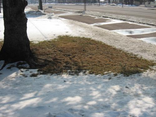 Brown Lawn - The snow is starting to melt finally. This is just temporary though.