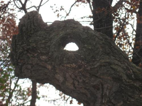 Holy Tree - I thought this was great looking.