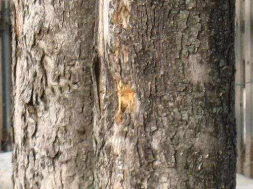 how to stop woodpecker damage to trees