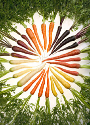 A carrot of a different color - purple, orange, red, yellow, and white carrots