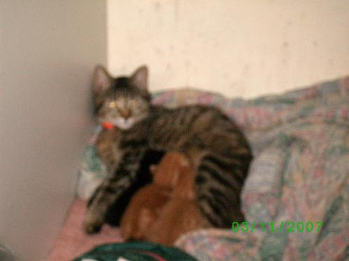 Tera - This is tera and her kittens last year, not long after their birth.