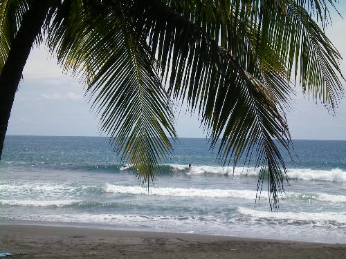 Palm Surfing - A shot of a surfer riding a wave at Jaco Beach, Costa Rica, shot through a palm frond.