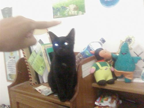 Cats - The black cat are sitting around my dolls and books.