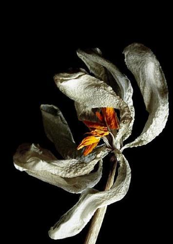 Life - Flower