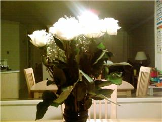 These are white roses I got for my wife - Spring time means flowers are in bloom. White roses are my wife's favorite.