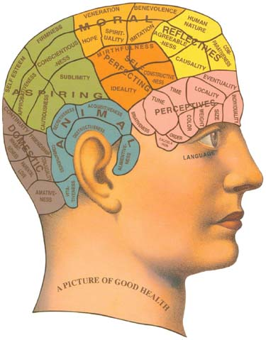 Human brain - Intelligence, what do you think of it?