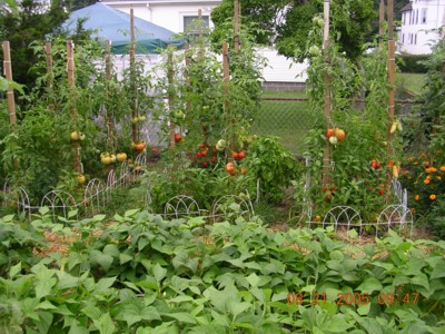 tomato garden - Are you ready for your garden this year.