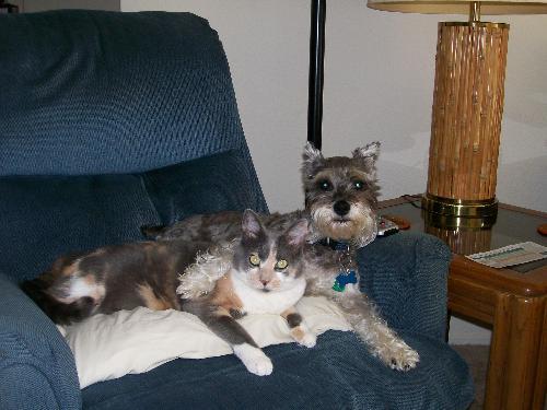 Best Friends - Our cat, Shady & our miniature schnauzer, Sunshine