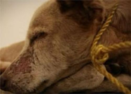 Guillermo Habacuc Vargas Creulty To Animals - This is so inhumane!
