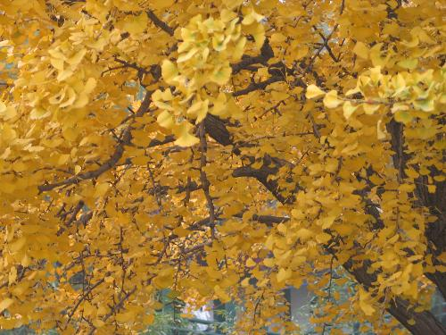 autumn - one of the shot i took when we are in beijing. i love all the colors at time like this.