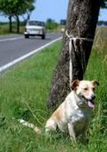 abandonment dog -  abandonment dogs image..