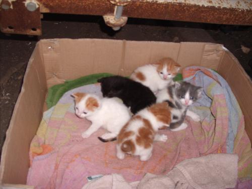 kittens - All five kittens