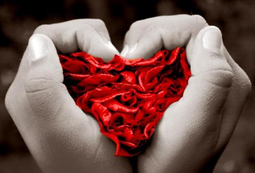 Love's Grip - Red rose petals in black and white hands